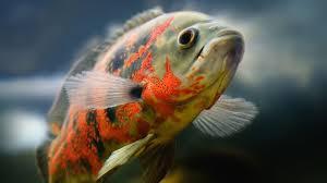 SATURDAY FISH KHANE KA HUKM ?